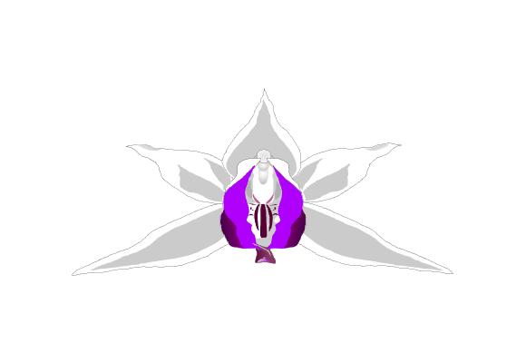 Kurpfalzorchid